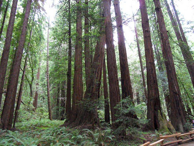 Wi Fi Radiation Is Killing Trees New Study Finds Popular