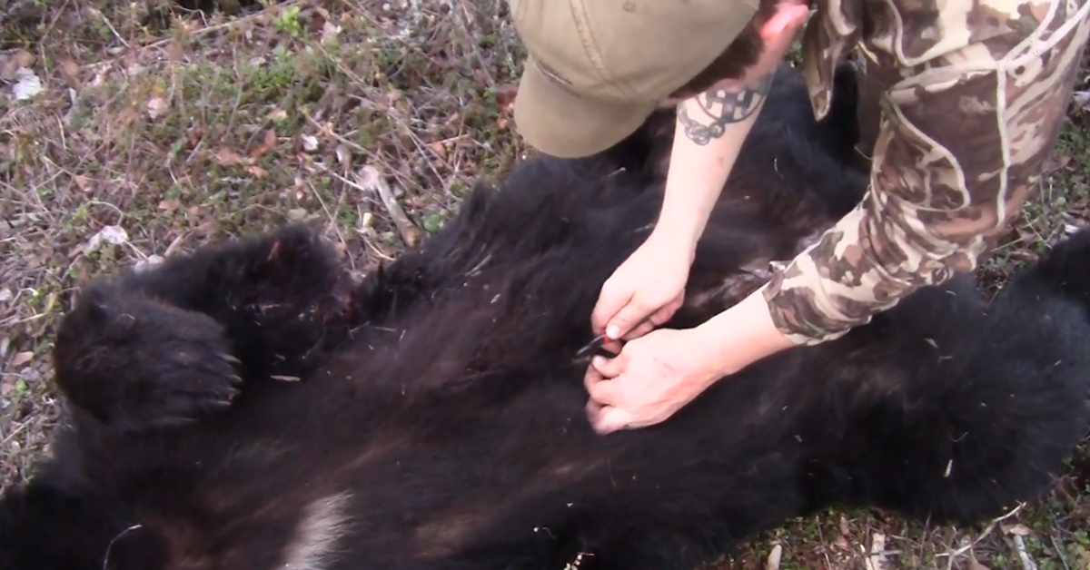 How to Skin a Bear in the Field
