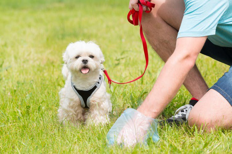 Not all dogs eat poop, but the ones that do like it fresh | Popular