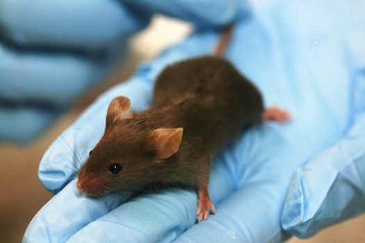 96c7335b97b Some Mice Have Become Immune to Poison Through Natural but Highly ...