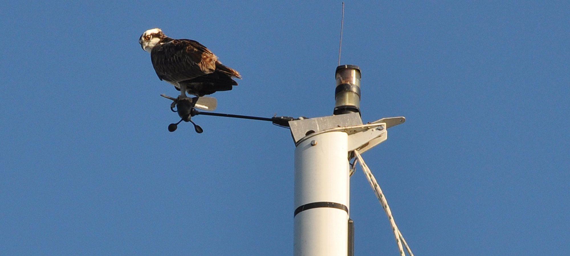 Bird Deterrents for Sailboats