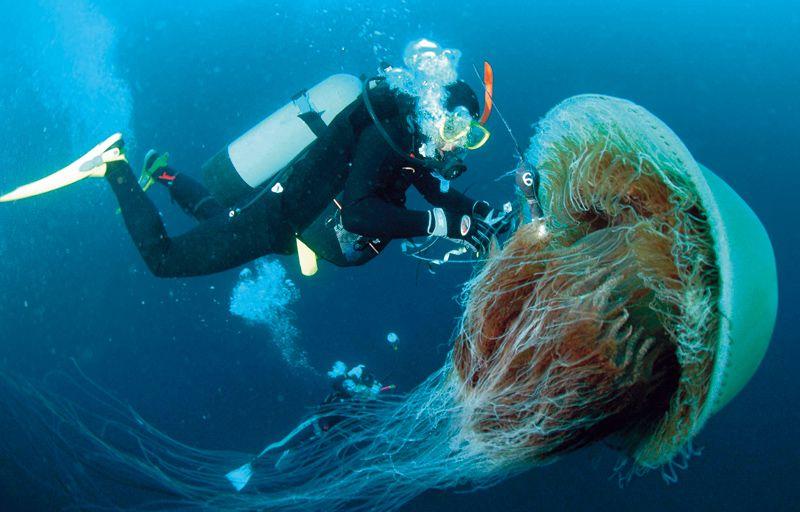 Jellyfish Invasion | Popular Science