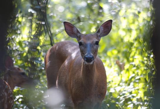 Video: New Study Sheds Light on What Deer See | Outdoor Life
