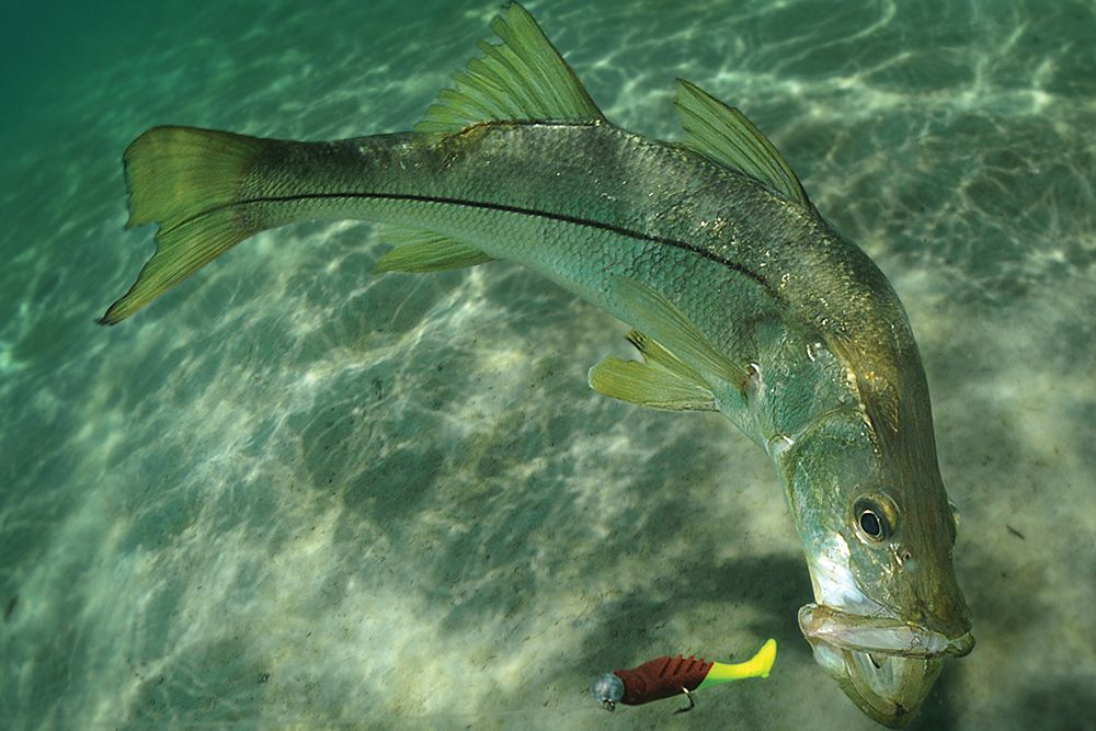 How to Rig Soft Plastic Lures for Salt Water | Sport Fishing Magazine