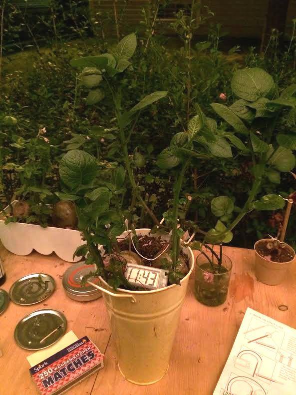 Potatoes Late Night Gardening And Diy Power Popular Science