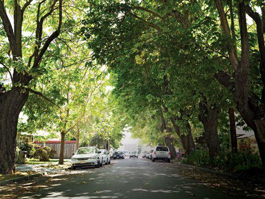 The Santa Cruz Experiment: Can a City's Crime Be Predicted