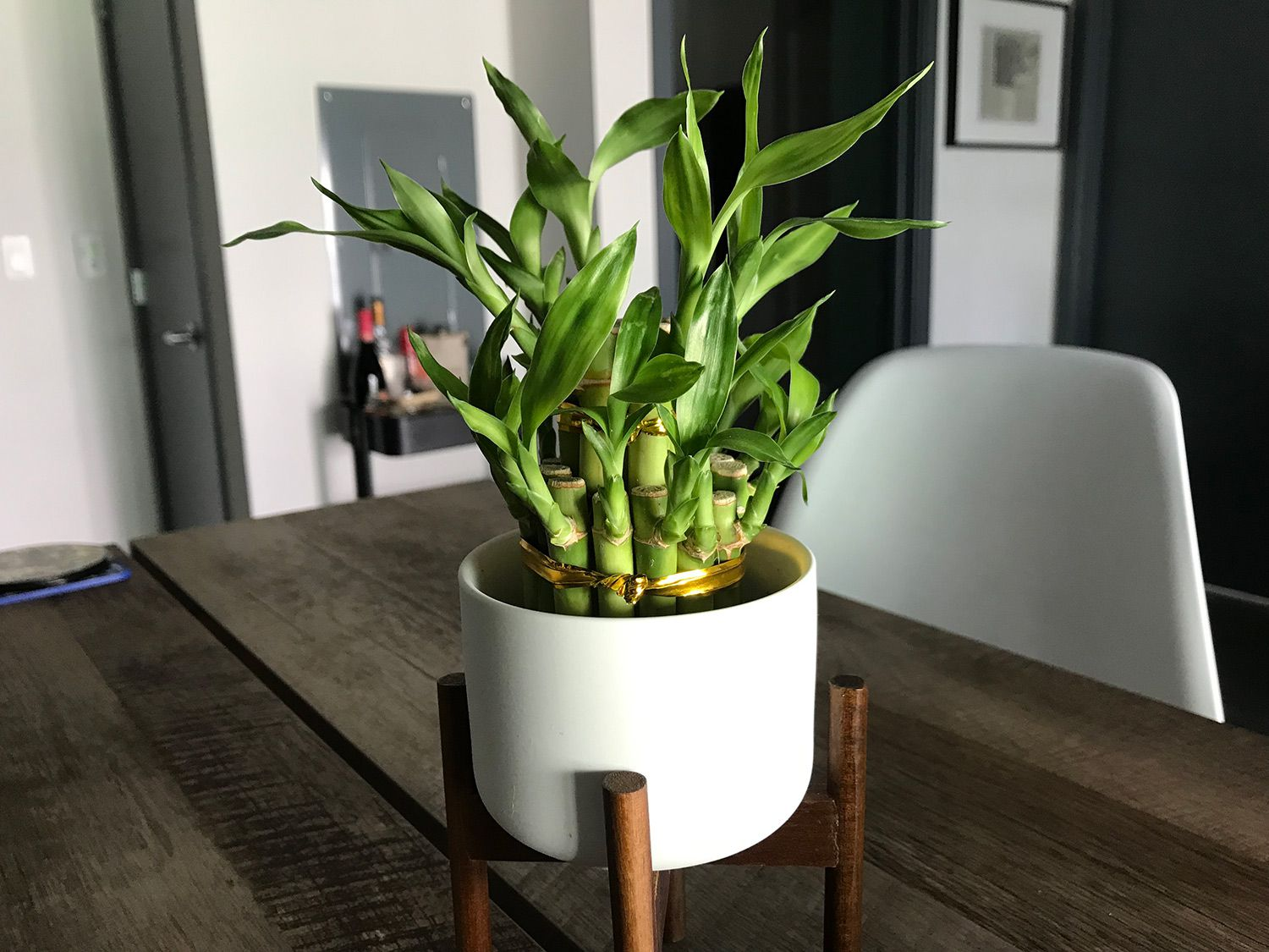 The best indoor plants for people who kill plants | Popular
