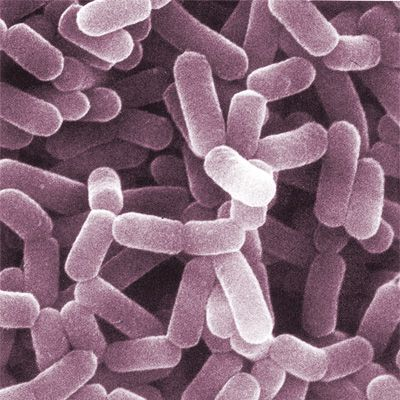Do probiotics actually do anything?   Popular Science