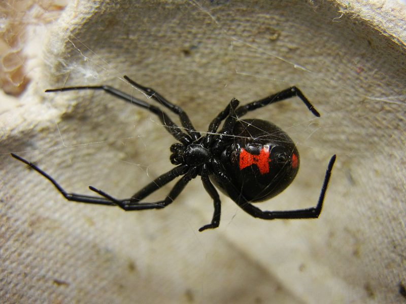 Spiders In Your Fruit A Good Thing Popular Science