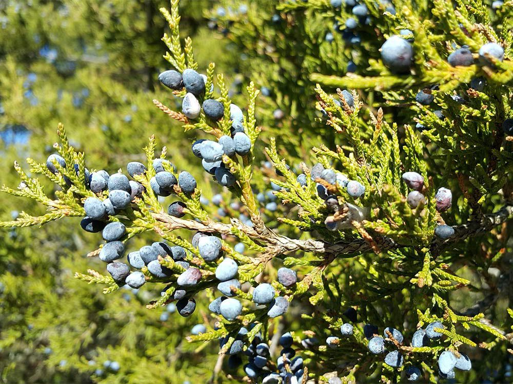 15 Trees Every Outdoor Lover Should Learn to Identify | Outdoor Life