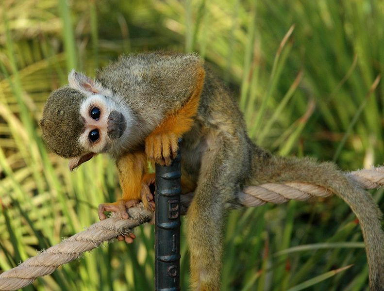 FYI: Why Are There No Native Monkeys In North America