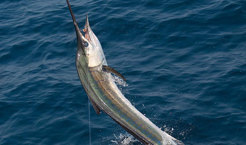 Offshore Saltwater Fishing, Charleston Offshore Fishing Report
