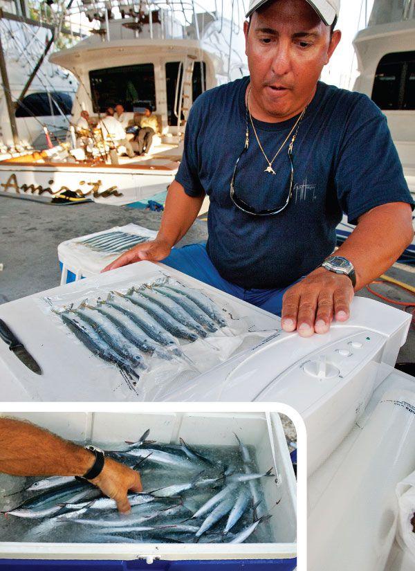 Ballyhoo Baiting Tips in Florida | Marlin Magazine