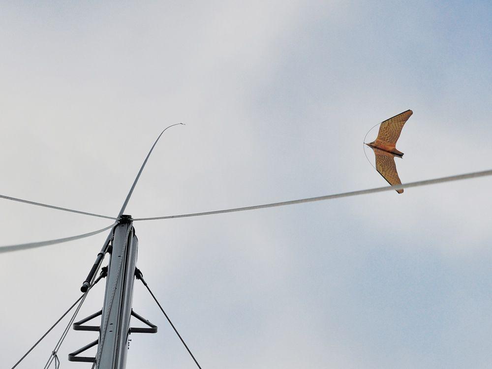 Bird Deterrents for Sailboats   Cruising World