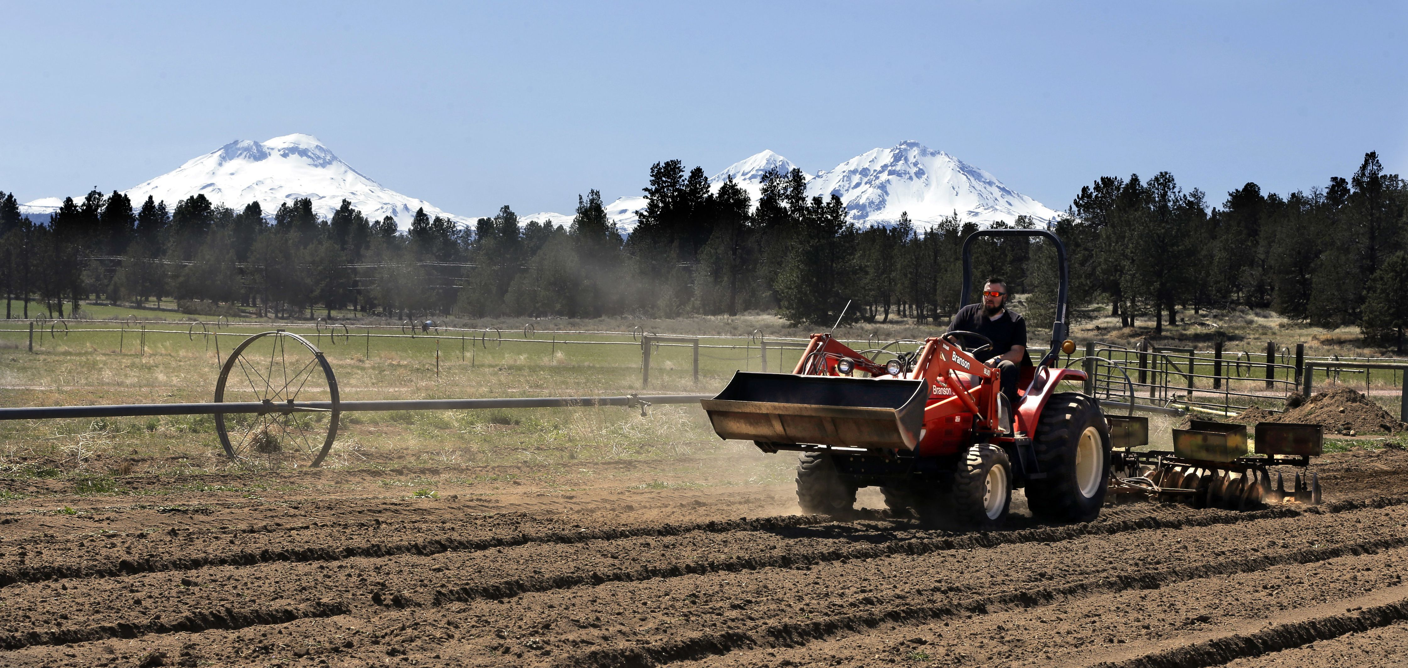 Oregon hemp industry poised for big growth after feds sign