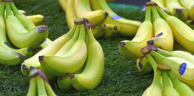 The world's bananas are under attack | Popular Science