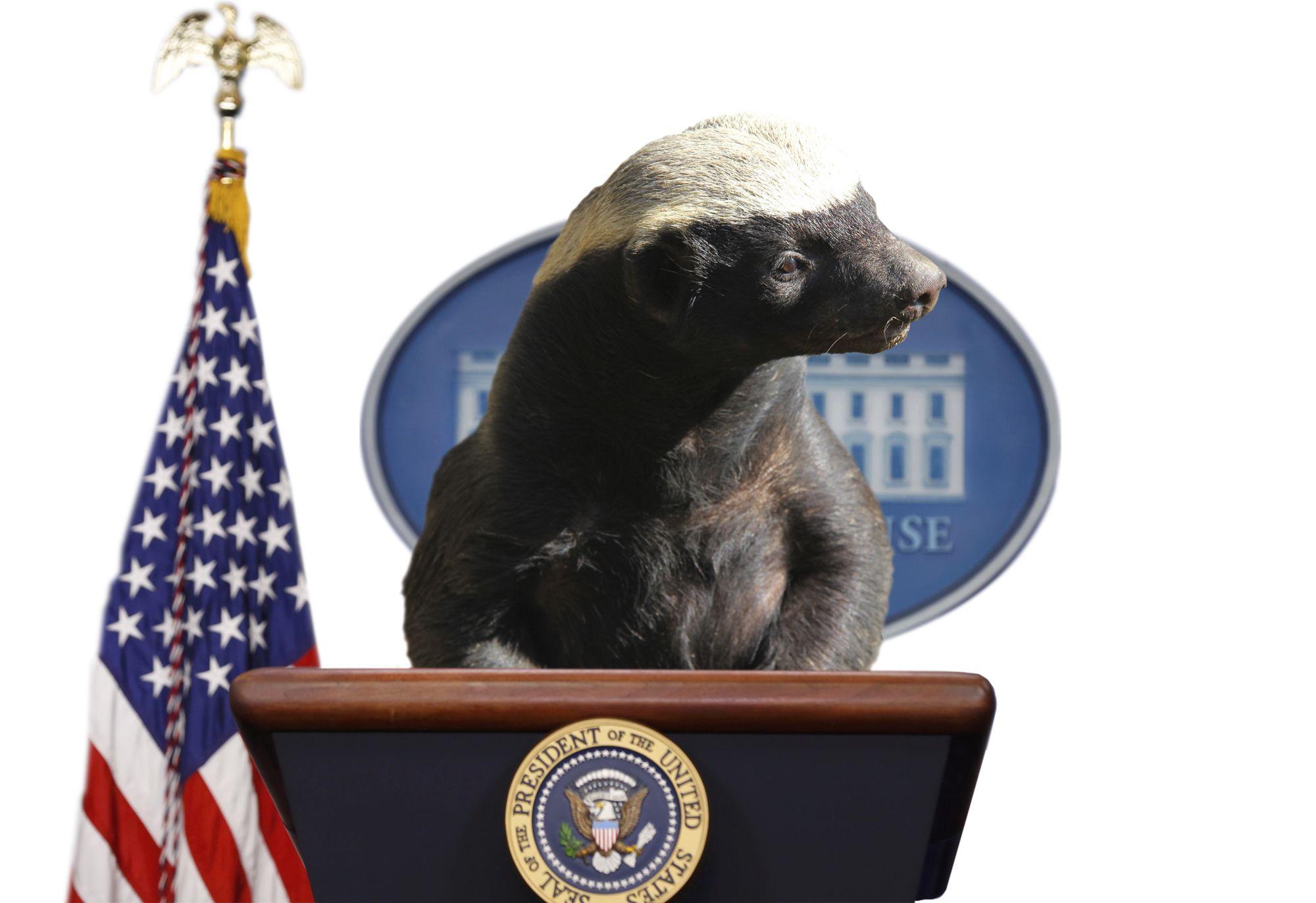 The Honey Badger Presidency The Boston Globe