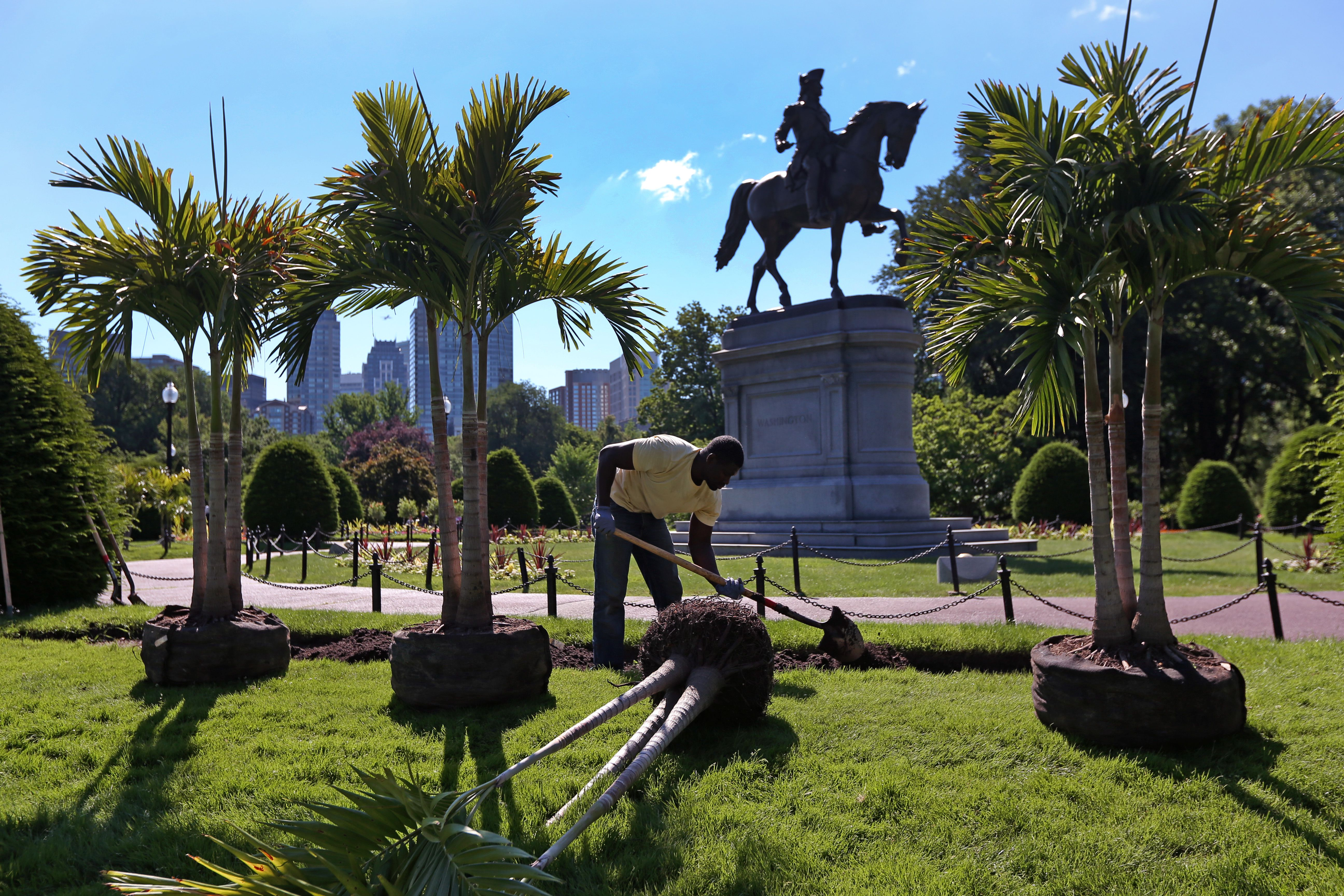 New tropical plants added to historic Public Garden beds - The