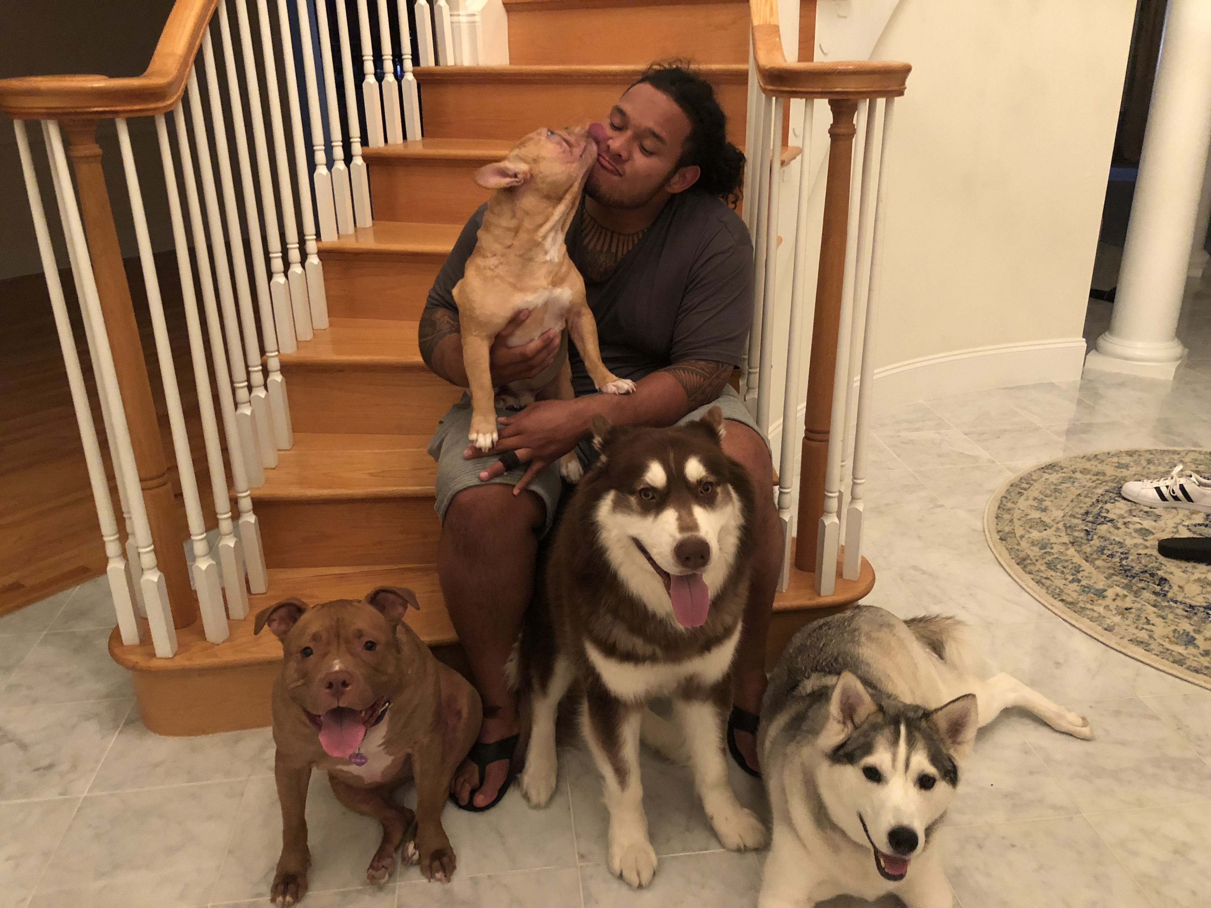 ba0393ef36b Growing furry family is a game-changer for this Patriot - The Boston Globe