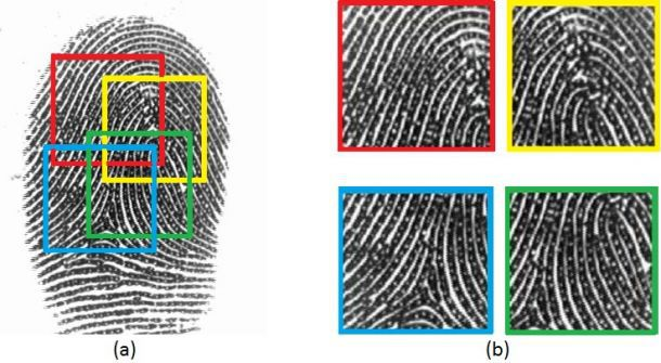 Computer scientists are developing a 'master' fingerprint