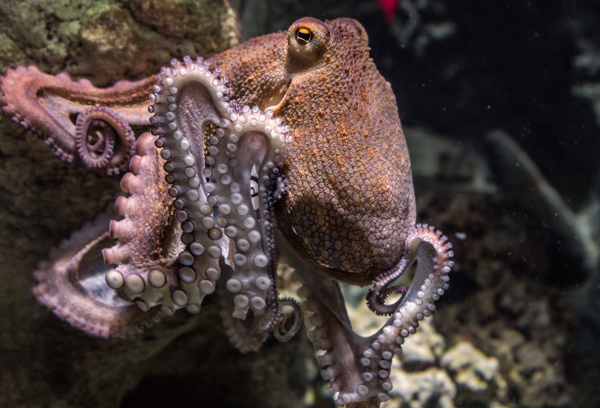 Octopuses are not aliens, but boy are they a bunch of beautiful ...