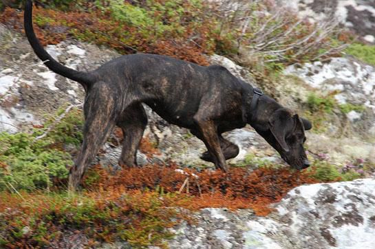 Hunting Dogs: Best Dog Breeds for Every Game Animal | Outdoor Life
